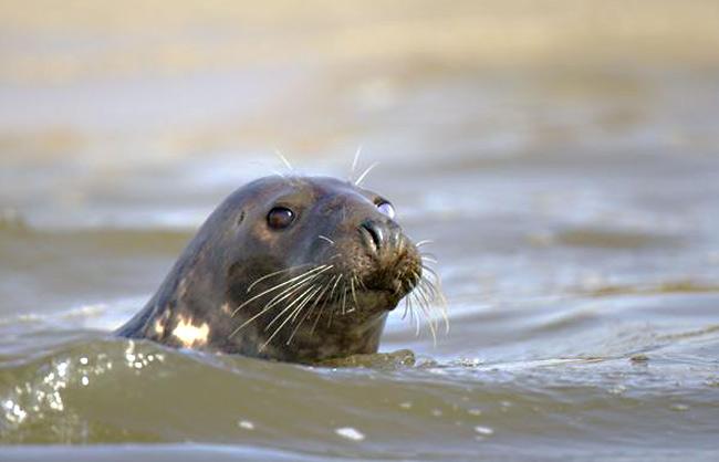 Observation de phoques