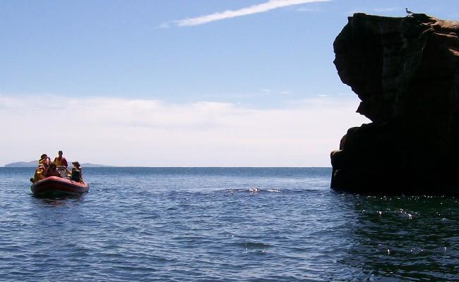 Zodiac: grottes et falaises